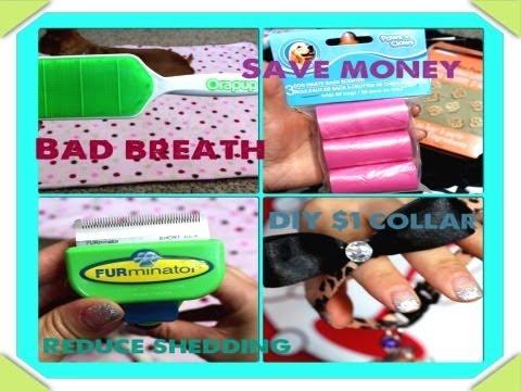 Dog Tips: Bad Breath, Shedding, DIY $1 Bow Collar