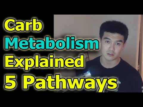 Carbohydrate Metabolism Explained - 5 pathways of carbs breakdown Precision Nutrition