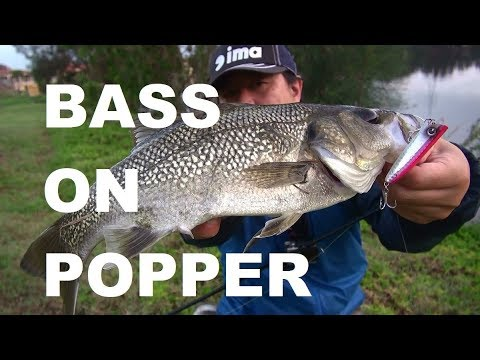 Australian Bass On Popper Rocky D Land Base Lure Fishing Vol.79