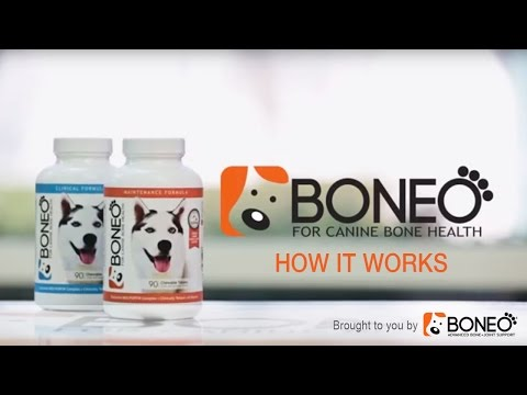 Boneo Canine Patented and Natural Bone and Joint Supplement for Dogs (How it Works)