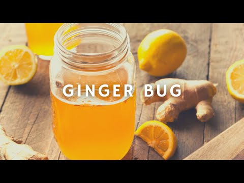 How To Make A Ginger Bug | Ginger Brew | Korenn Rachelle