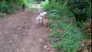 My dogs running in the woods!