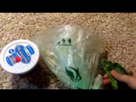 How to get your bearded dragon to eat veggies.