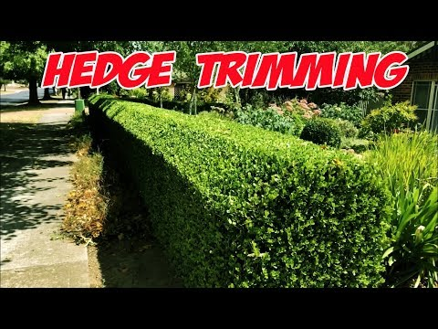 Hedge trimming tips in realtime. How to trim a hedge the easy way