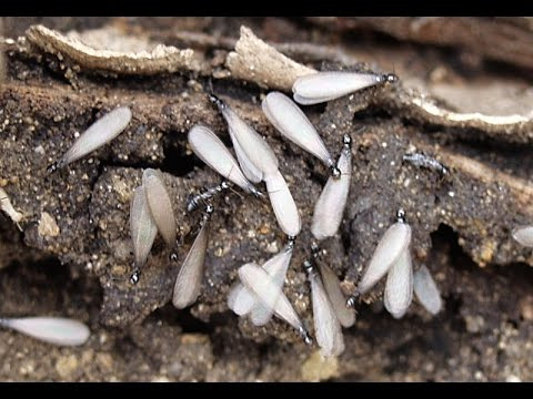 Silverfish Millipede Springtail and Termite Treatment NJ 732-309-4209