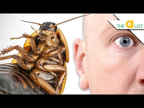 5 Bugs That Could LIVE IN YOUR HEAD