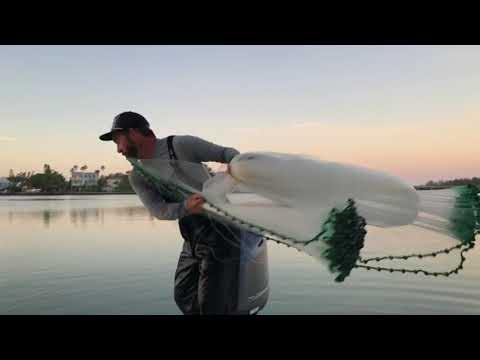 NETTING LIVE PIN FISH IN TAMPA BAY
