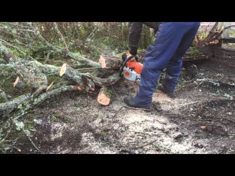 Working with Stihl MS 271 chainsaw