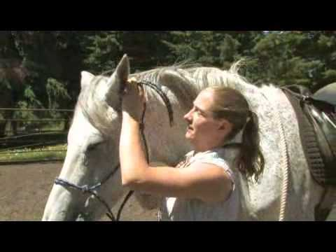 How to Tie a Horse Halter