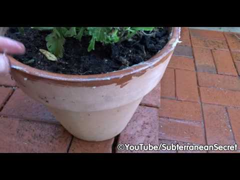 How to Stop Garden Slugs from Eating Plants in Your Plant Pots