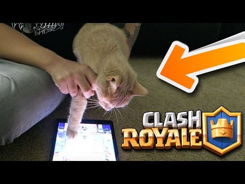 TEACHING MY CAT TO PLAY CLASH ROYALE