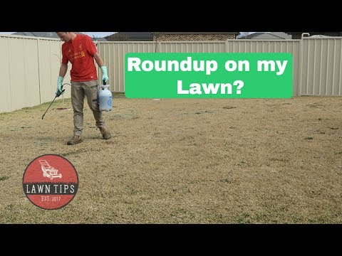 Roundup On My Lawn? | Spot Spraying