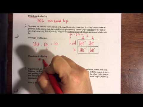 Monohybrid practice problems 1-3