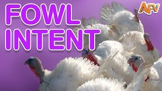 Fowl Intent | Best of AFV