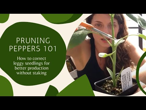 Pruning Peppers 101