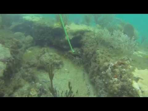 How to snare a South Florida spiny lobster