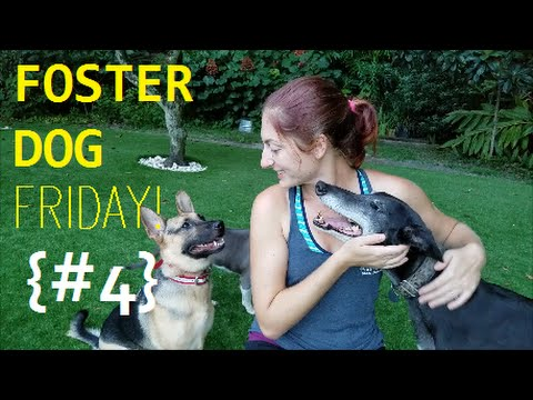 Foster Dog Friday - Episode #4 | The Honeymoon Period With Dogs