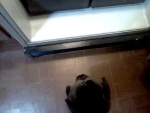 Everytime I open the fridge AHHHHH!!!!