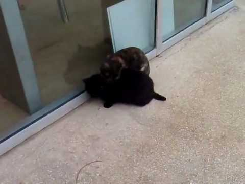 חתולים מתכרבלים בחורף בגשם - cats snuggling to stay warm