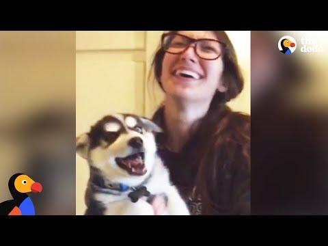 Husky Puppy Tries To Talk  | The Dodo