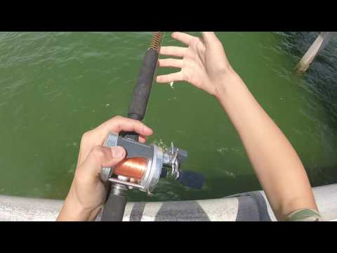 how to catch big pinfish for bait.