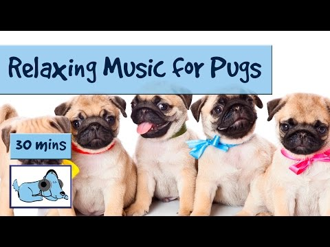 Music for Pugs and Pug Puppies! Soothing Music for Pugs, Calm Down Pugs with Breathing Difficulties