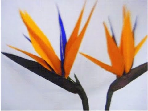 How to make Paper Flowers Bird Of Paradise/ Strelitzia (Flower # 46)