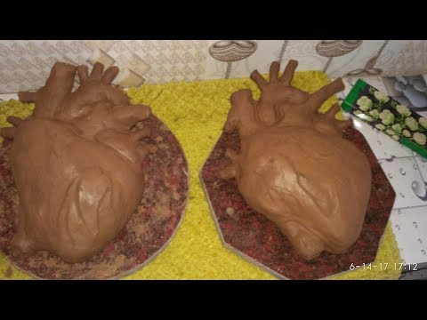 Make heart modeL with clay