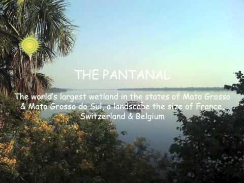 Brazil Travel: Amazon Rainforest & Pantanal Wetlands