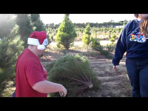 Cutting Down The Mitchell Family Christmas Tree 2011