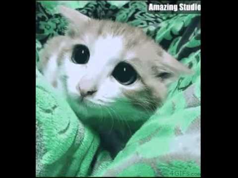 Cat pupils dilate pounce