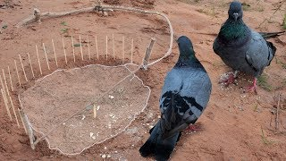 Awesome Quick Bird Trap Using Net Trap Stock Vector - How to make an survival trapping work 100%