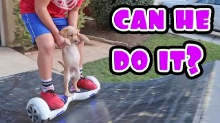 PUPPY ON HOVERBOARD!