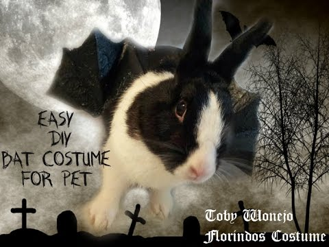 Easy DIY ✂🎃Halloween Bat Costume For Pet 🐰 Toby Wonejo Florindo´s costume