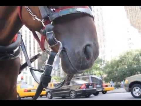 Horse epistaxis