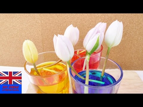 EXPERIMENT: CHANGING TULIP COLOURS   how to dye flowers with food coloring