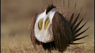 Healthy Attraction | Battle of the Sexes in the Animal World | BBC