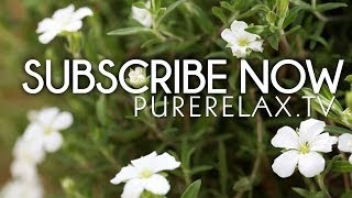 Welcome To Purerelax.tv - Subscribe Now!