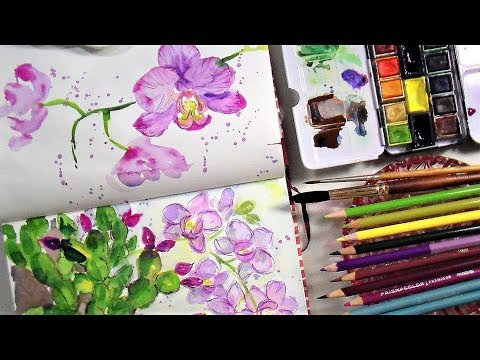 Sketchbook Sunday Loose Orchids in Watercolor/Colored Pencil