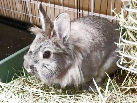 Apoo the Bunny in her Litter Box
