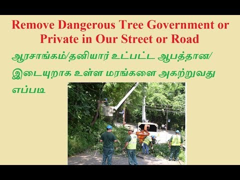 How to Remove Dangerous Tree Government or Private in Our Street