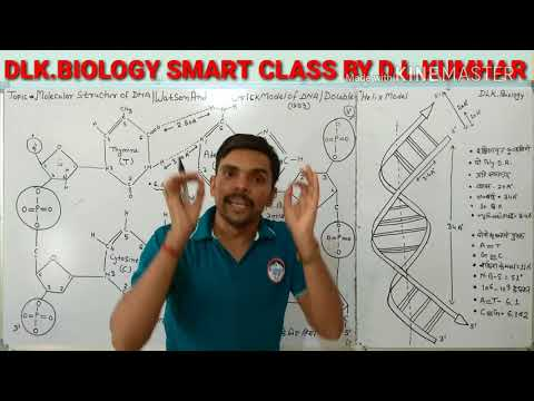 Molecular Structure Of DNA /Watson And Crick Model /Double Helix Model Of DNA
