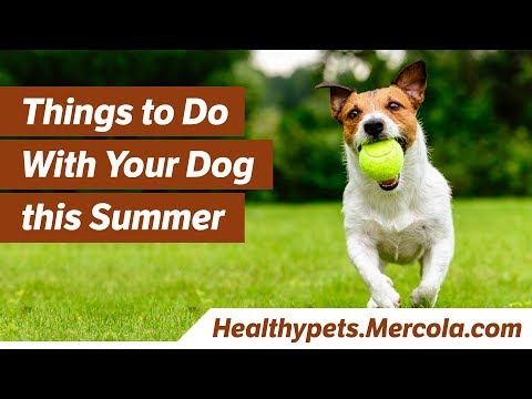 Things to Do With Your Dog This Summer