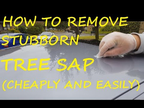 How to remove hard tree sap from car bodywork