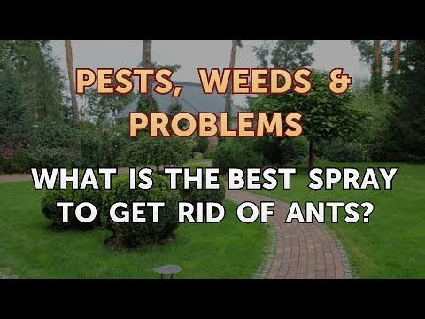 What Is the Best Spray to Get Rid of Ants?