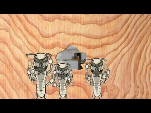 How Termites invade your Home | Termite Troop from Rentokil