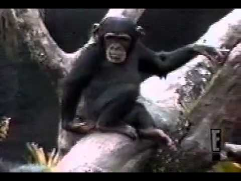 Funny monkey sniffs finger