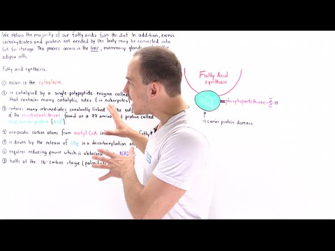 Introduction to Fatty Acid Synthesis