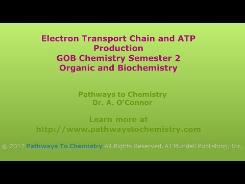 The Electron Transport Chain and ATP Production