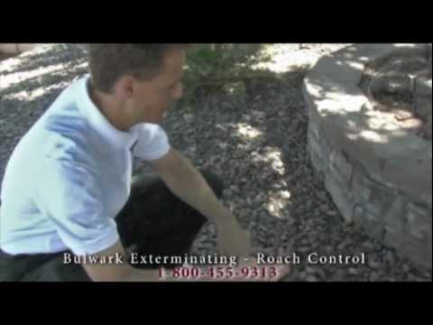 Controlling Roaches - Bulwark Exterminating - Roach Control